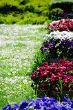 Pansy Flower Pots