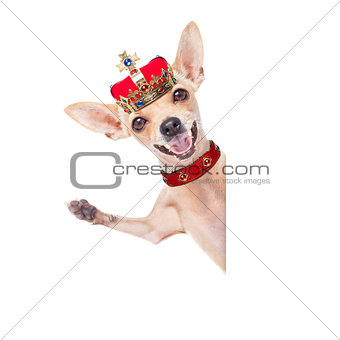 crown king dog