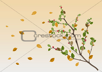 Autumn season. Yellow leaf branch