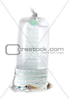 fish in plastic bag