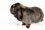 Rabbit on the snow