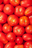 Fresh garden red tomatoes