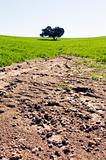 Eroded field