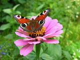butterfly on flower in my garden