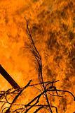 Bonfire 03