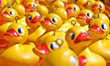 rubber ducky you are the one