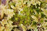 Mossy groundcover