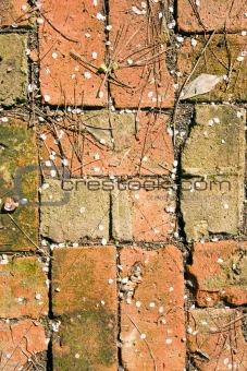 Bricks and blossom