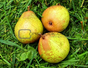 Three pears.