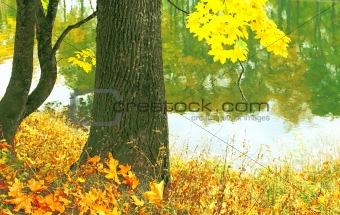 Autumn waltz.