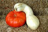 Gourd hugs Pumpkin