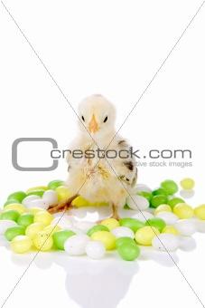 Candy chicken