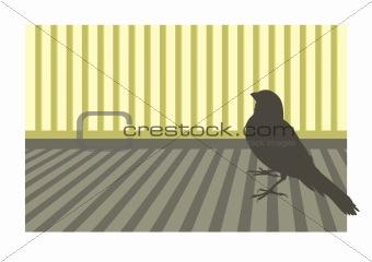 Canary bird 1