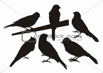 Canary bird silhouettes
