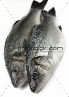 two sea bass