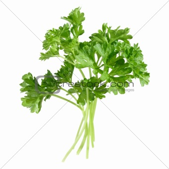 a few sprigs of parsley, isolated