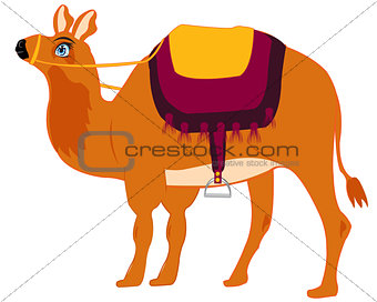 Animal camel with saddle