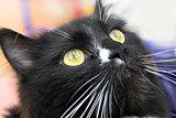 muzzle of black cat