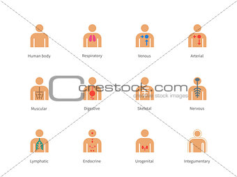 Anatomy and Human Systems color icons on white background.