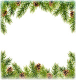 Green Christmas Tree Pine Branches with Pinecones Like Frame wit