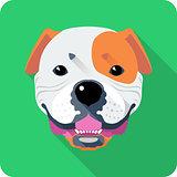 dog American Bulldog icon flat design