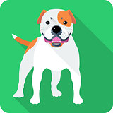 dog American Bulldog icon flat design