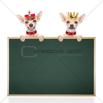 crown king dog