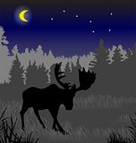 Elk in the night forest