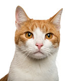 Close-up of a cat in front of white background