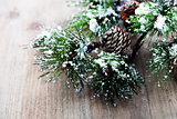 Christmas pine tree branch