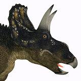 Nedoceratops Dinosaur Head