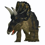 Nedoceratops on White