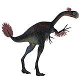 Gigantoraptor Dinosaur Tail
