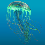 Glow Green Jellyfish