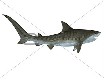 Tiger Shark Side View