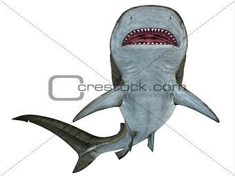 Tiger Shark Underside