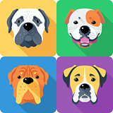 Set dog head icon flat design