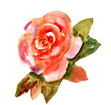 Vintage watercolor bright red rose