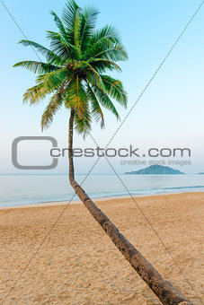 single curved palm and a sandy beach