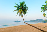beautiful coconut palms and tropical beach