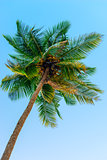 top of a coconut tree against the sky