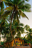 wooden bungalow among tropical coconut palms