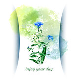 Vector greeting card with wild flowers