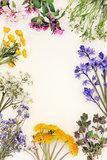 Spring Wild Flower Border