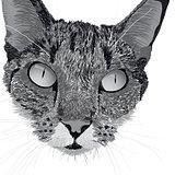 head of a cat