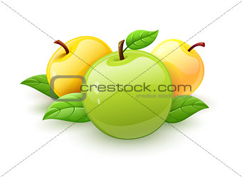 Apple fruits with green leaves vector