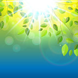Shiny Spring Natural Leaves Background. Vector Illustration