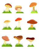 Nine mushrooms set