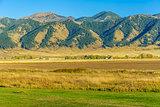 Bridger Mountain Fields