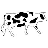 Silhouettes of spotted cow. Vector illustration.